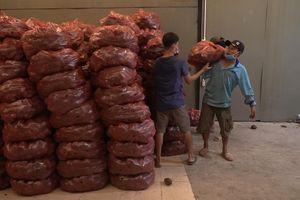 Người dân TP.HCM đổ xô mua khoai lang tím giá 2.000/kg