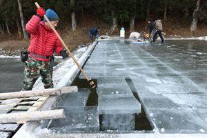 Nghề trồng băng truyền thống của người Nhật
