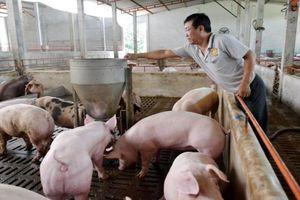 Giá lợn hơi hôm nay 12/6/2021: Cao nhất đạt 75.000 đồng/kg