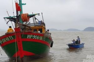Hải Phòng khẩn cấp đề phòng bão lớn đổ bộ
