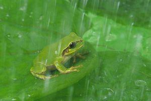 Nuốt chửng ếch để chữa bệnh, người đàn ông gặp họa suýt chết