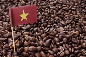 Giá cà phê hôm nay 12/6: Thiếu động lực bứt phá, cà phê arabica không chống được 'gió ngược'
