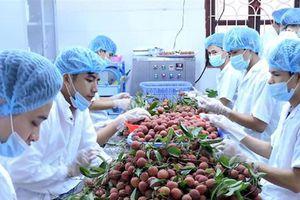 Tiếp cận thị trường ngoại, nông sản lên sàn