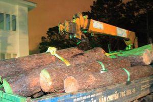 Nhân viên bảo vệ rừng cầm đầu vụ triệt hạ cổ thụ ở Đà Lạt