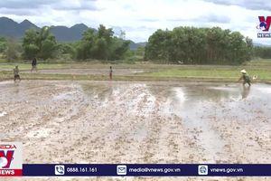Thừa Thiên - Huế ứng phó với nguy cơ thiếu nước tưới