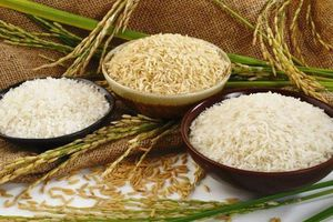 Giá lúa gạo hôm nay 12/6: Giá lúa ổn định, giá gạo nguyên liệu tăng