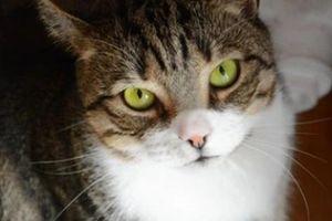 Người phụ nữ có nguy cơ bị mù sau khi lây bệnh đậu bò hiếm gặp từ mèo cưng