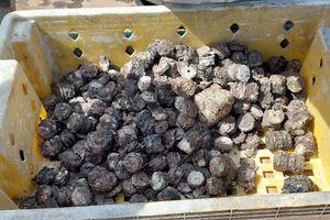 Quảng Bình: Ngư dân phát hiện và trục vớt gần 8 tạ tiền xu ở dưới biển