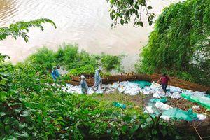 Mưa lớn gây sạt lở đê sông Đáy