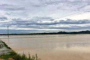 Ảnh hưởng bão số 2, hàng nghìn hecta lúa hoa màu ở Nghệ An, Hà Tĩnh chìm trong 'biển nước'