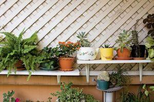 8 cách chăm sóc cây cảnh trong nhà để cây luôn đẹp và tươi tốt