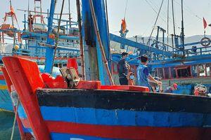 Ngư dân rơi xuống biển mất tích tại Bình Định