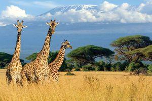 Kenya và những chuyến đi đầy cảm hứng