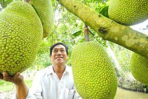 Tại sao trái cây Việt Nam có nguy cơ bị lép vế xuất sang Trung Quốc?