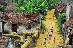 Đường làng vàng óng rơm quê