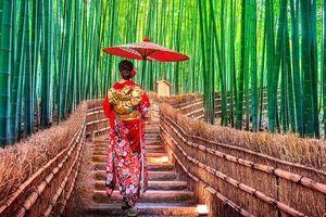Lạc lối trong rừng tre Arashiyama - niềm tự hào của cố đô Kyoto