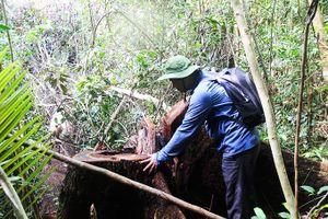 Gian nan quản lý, bảo vệ rừng
