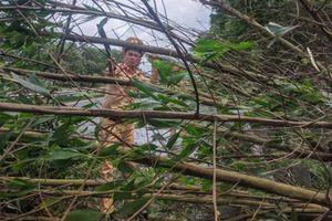 CSGT chặt cành, dọn cây đổ trên cao tốc Pháp Vân - Cầu Giẽ - Ninh Bình