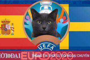 Mèo tiên tri dự đoán Tây Ban Nha vs Thụy Điển - EURO 2021: Mèo Cass đặt niềm tin vào 'bò tót'