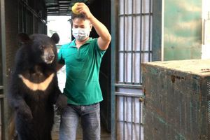 4 cá thể gấu cuối cùng ở Rạp xiếc Trung ương được cứu hộ
