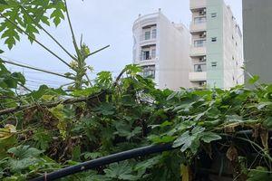 Thiếu niên rơi từ lầu 4 tại 1 chung cư ở Đà Nẵng tử vong