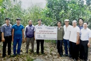 Hợp tác xã Minh Hòa Phát: Điểm sáng trong chuyển đổi cơ cấu cây trồng