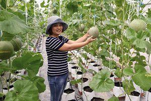 Trà Vinh phát huy lợi thế để phát triển nông nghiệp