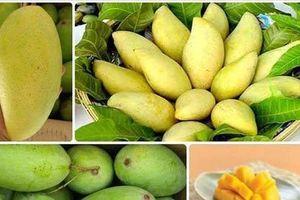 5 tháng đầu năm, xuất khẩu sang thị trường Trung Quốc 2,5 triệu tấn trái cây tươi