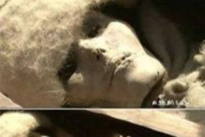 Điều gì bí ẩn bên trong xác ướp công chúa Tân Cương sau 4.000 năm vẫn đẹp quyến rũ?