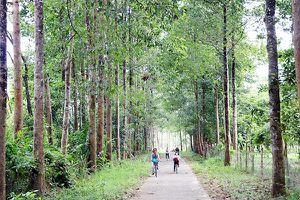 Tiếp tục trồng 18 triệu cây xanh