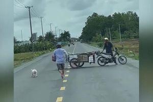 Đuổi lợn trên đường, người đàn ông chạy bở bơi tai