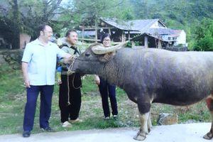 Liên kết trong chăn nuôi - mô hình điểm hiệu quả cao ở Lai Châu