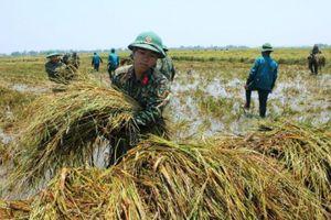 Phát huy vai trò của nông dân trong tham gia bảo đảm quốc phòng, an ninh