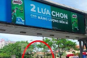 Vì sao nhiều cầu vượt đi bộ tiền tỷ Hà Nội ế khách?