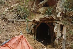 'Vàng tặc' đục khoét rừng phòng hộ Thừa Thiên Huế