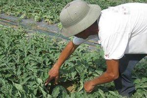 Trốn cách ly đi làm ruộng, một nông dân bị phạt 5 triệu đồng