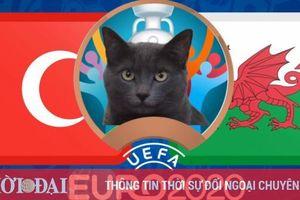 Mèo tiên tri dự đoán Thổ Nhĩ Kỳ vs Xứ Wales - EURO 2021: Mèo Cass tin chủ nhà
