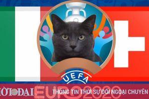 Mèo tiên tri dự đoán Italia vs Thụy Sỹ - EURO 2021: Mèo Cass chọn đội mạnh