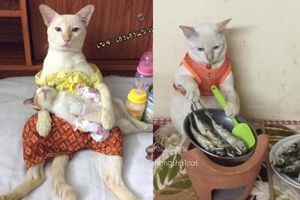 Sinh hoạt đời thường của loài mèo gây 'sốc': Cái gì cũng đến tay mẹ bỉm cân hết
