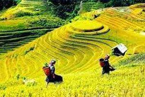 Hà Giang: Tổ chức tuần văn hóa 'Qua những miền di sản ruộng bậc thang Hoàng Su Phì'