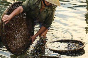 Nghề 'lạ mà quen' ở Hà Tĩnh: Cả làng đi thụt lùi đãi 'lộc trời' trên sông La