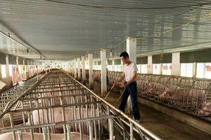 Thanh Hóa: Tập trung thực hiện các biện pháp cấp bách ngăn chặn bệnh Dịch tả lợn châu Phi