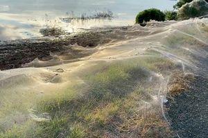 Mạng nhện khổng lồ bao phủ vùng ngoại ô ở Australia