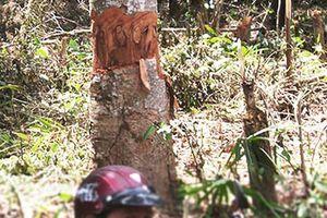 Phục hồi vụ án 'tham ô' ở Ban quản lý rừng phòng hộ Sông Hinh
