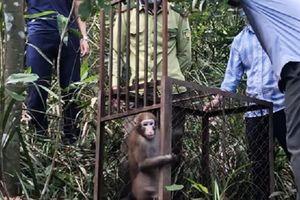 Khỉ mốc, trăn gấm quý hiếm sao... lập tức được thả về rừng ở Hà Tĩnh?