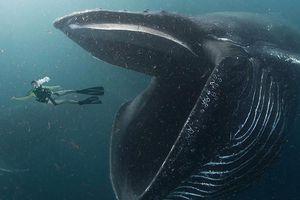 Cú sốc của ngư dân sống sót sau khi bị cá voi khổng lồ 'nuốt nhầm'