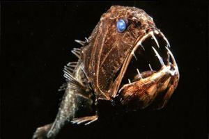 Loạt quái vật dưới đáy đại dương nhìn thôi đã thấy khiếp