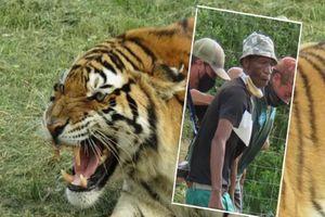 Hổ vồ chết người trong công viên gây sốc