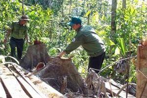 Phục hồi điều tra vụ tham ô tại Ban quản lý rừng phòng hộ Sông Hinh