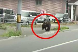 Gấu tấn công căn cứ quân sự ở Nhật Bản